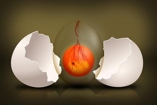 Y en el futuro evolucion pixabay huevo
