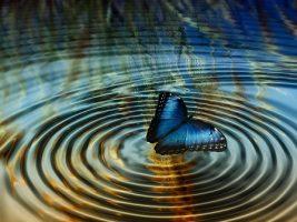 Butterfly mariposa pixabay