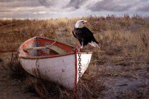 pajaro ecologia ambiente pixabay