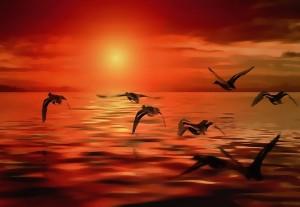 rio pajaros tranquilidad pixabay