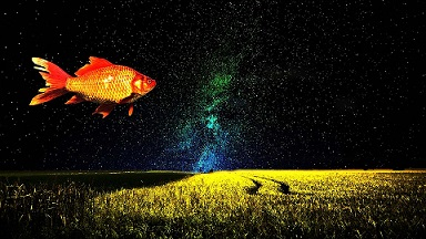 fish pescado mar pixabay