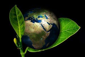 Ecology ecologia pixabay