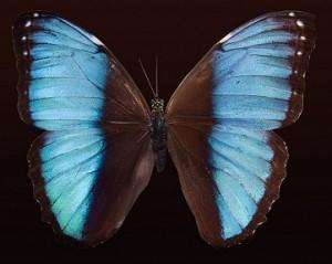 amazonas mariposa pixabay libertad