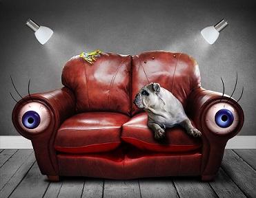 animal perro sofa pixabay