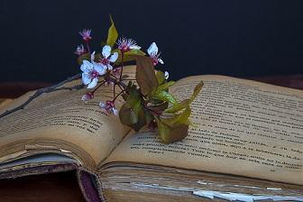 estudiante libros flor pixabay