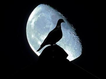 si-por-la-paz-colombia-paloma-dove-2-pixabay-y