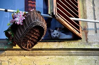 pobreza-gato-casa-pixabay