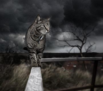 customer-cliente-gato-osucro-noche-pixabay