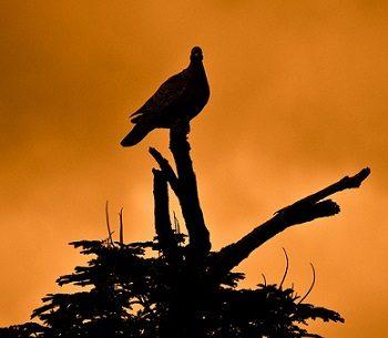 Paz paloma amanecer pixabAY