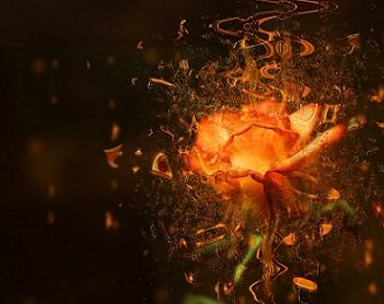 Victori flores color fanta pixabay