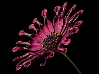 Africano flore pixabay