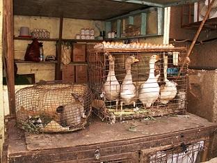 Cameroon camerin pixabay 3