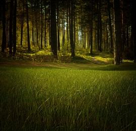 Forest bosquie pixabay