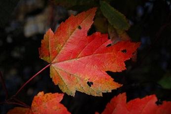 revol cahnge cambio flor otoño