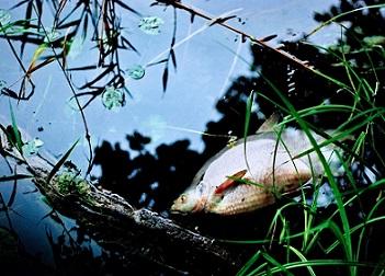 mares agua ecolog pescado contami pixabay