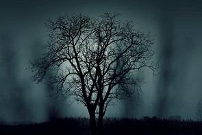 Open invierno arbol seco pixabay