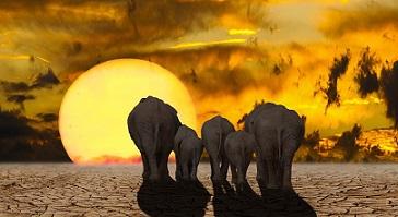 Peter bunyard cambio climatico pixabay