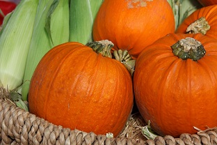Transgenicos maiz calabaza cultivo pixabay